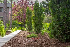 SCHNEIDER_WALL_PLANTS_1